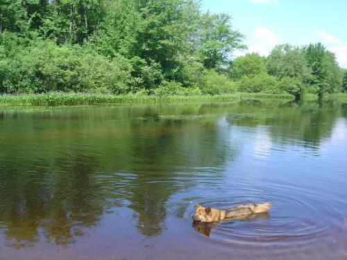 Reggie takes a swim