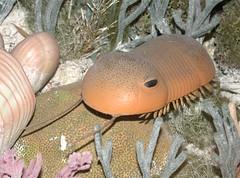 Silurian trilobite