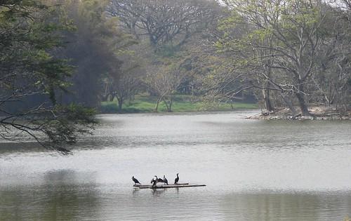 karanji lake, mysore