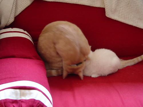 Puddle nursing, Nutmeg playing.