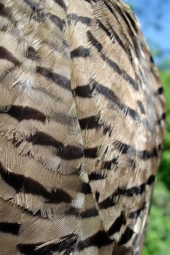 Flicker Wing