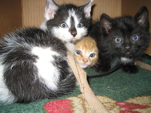 Kissat laatikossa