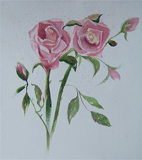 pink roses5