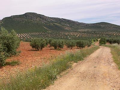 Sierra de Herencia, Tocón