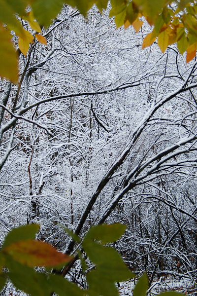 The first snow of the season covers the branches in the woods.