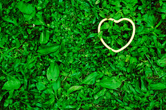 Green Heart (And the Green Grass Grows All Aro...