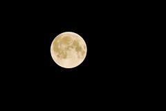 Full Moon (Moony 11)