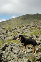 A hiking dog