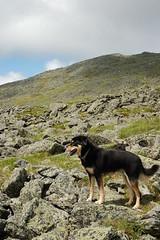 A hiking dog