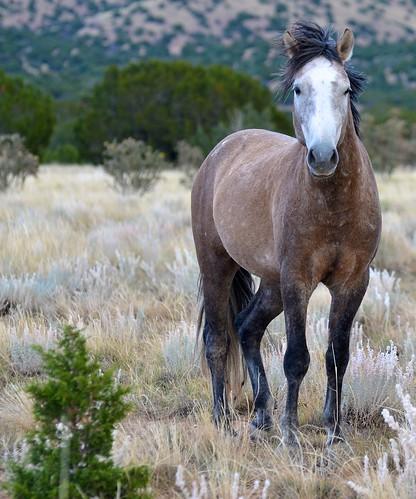 NM Wild Horses nwm (36)