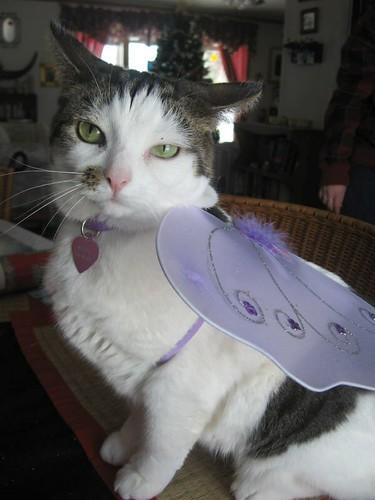 Even our cats wear fairy wings. :) Meet Roane.
