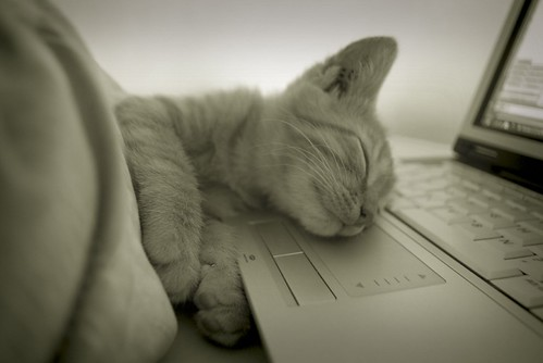 The Sleeping Geek Kitten - Angers -
