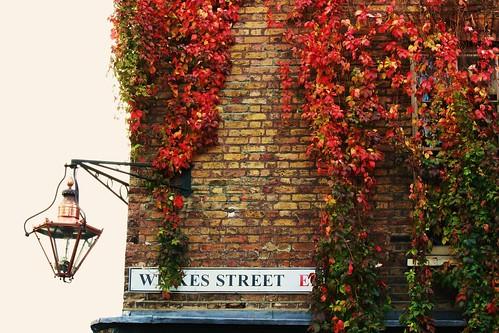 Wilkes Street Autumn Leaves