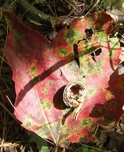 leaf nut
