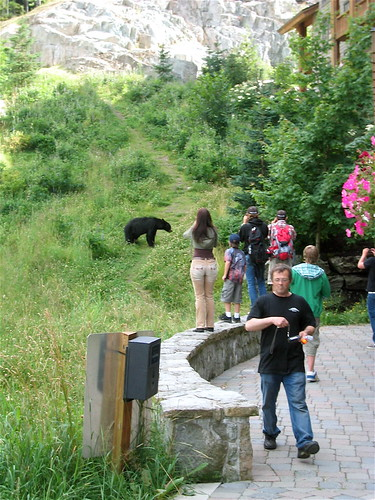 Bear strolls down the trail