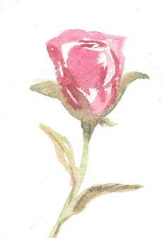pinkbud72