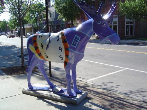 Timely moose