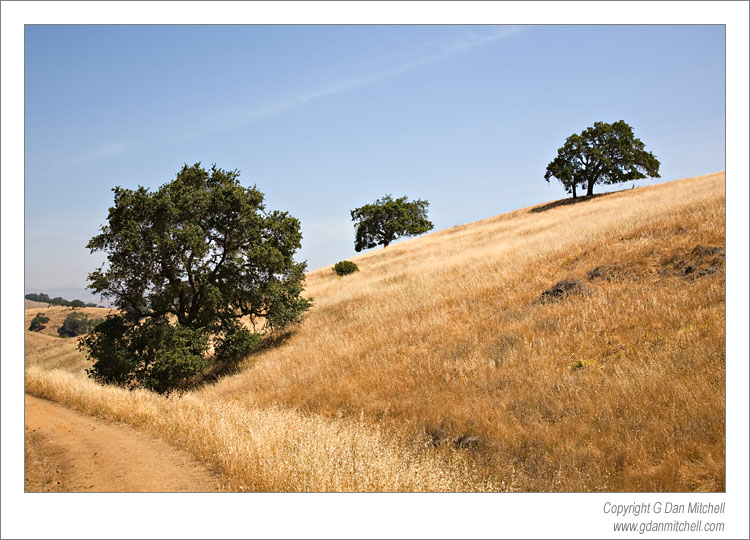Three Trees, Calero Hills