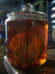 large brain jar 7 $50