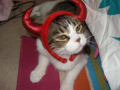 Ziggy the Devil Cat