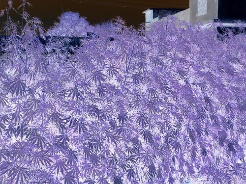 The Negatives of Marijuana by Swamibu