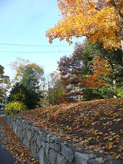 Stone wall with fallen leaves
