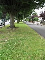 Hornbeam, Sunderland Avenue