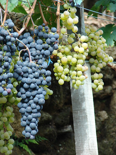 Uvas negras y blancas