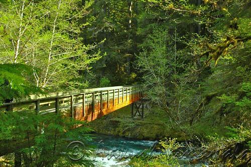 Bridge To Wilderness
