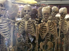 natural seamless skeletons 1