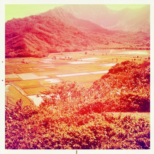 Hanalei Lookout: Taro Fields