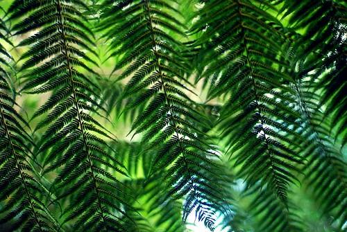 #38/365 - Ferns a'plenty