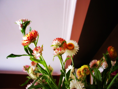 #25 - Flowers from Natália