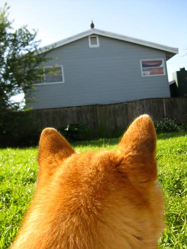 Bowdu stalks a turkey on the roof