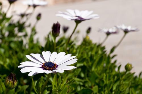 Resistencia primaveral ante el otoño