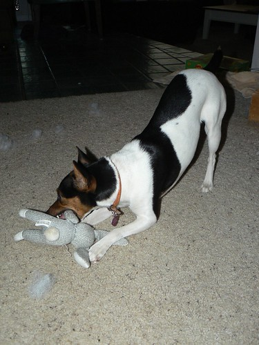 Ruby killing her Sock Rabbit toy