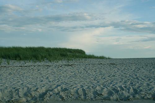 More sea grass and beach, Prouts Neck
