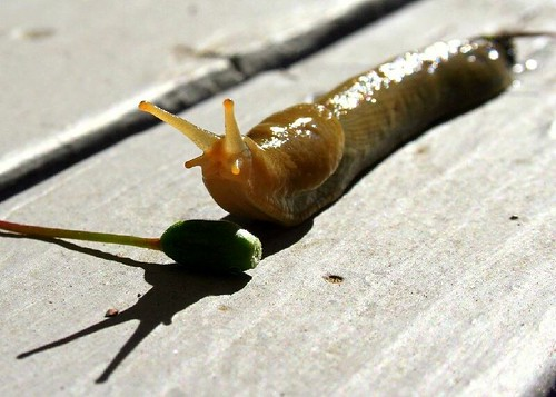 The High Hurdles in Slug World