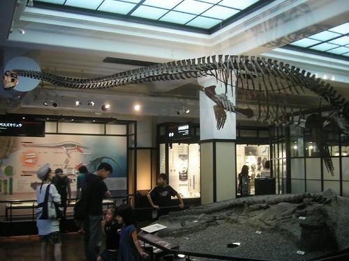 Pleisosaurio