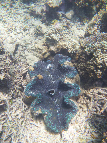 GBR: Giant Clam