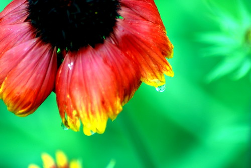 red flower, saturated