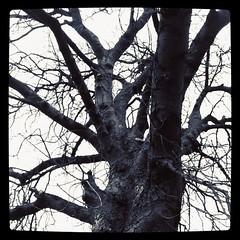 Up a tree.
