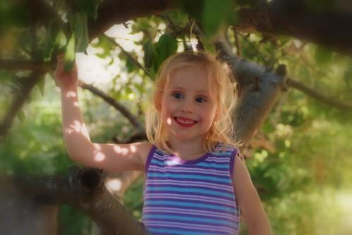 A in tree.jpg