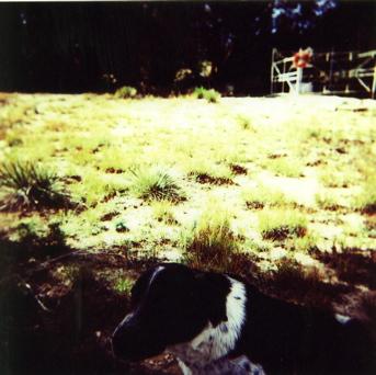 graveyard dog new mexico