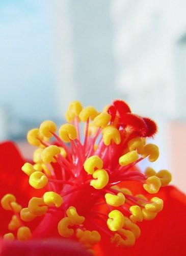 Hibiscus sky background