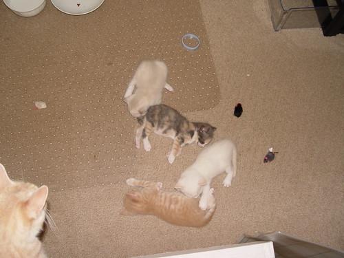 Kittens sleeping.