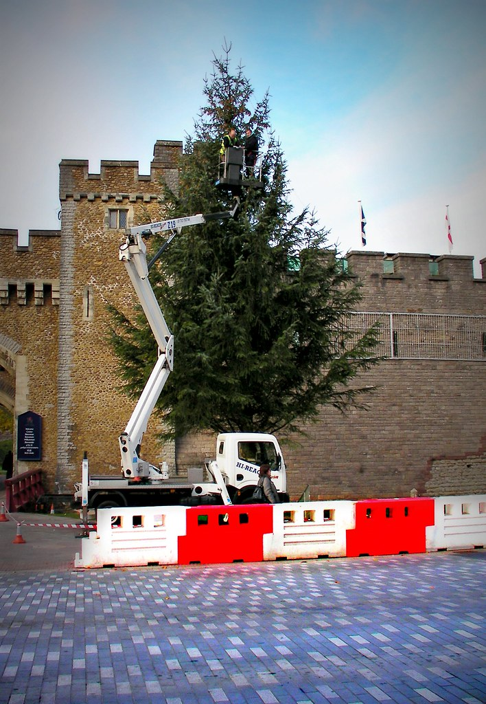 Christmas Trees in Cardiff