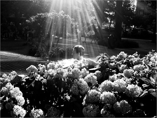 """Beauty Among the Flowers"""