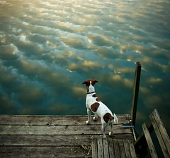 Even dogs enjoy the beautiful nature