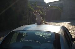 Kitty taking some morning sun in Istanbul